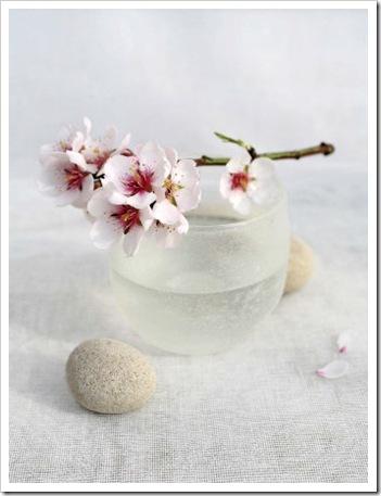 Almond Tree - Amelie Vuillon