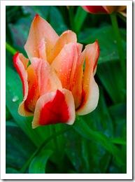 FlowersBearCreek045cropped12