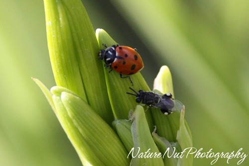 Ladybug and What2
