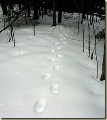Geocaching Tracks in Snow