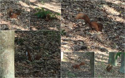 Wiewiórki na Grabinie