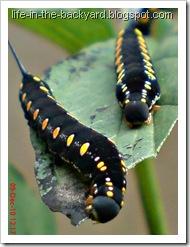 Caterpillars Attack 10