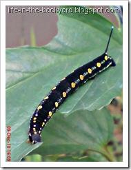 Caterpillars Attack 7