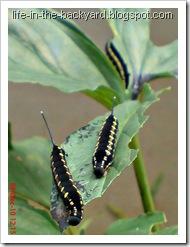 Caterpillars Attack 9