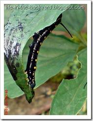 Caterpillars Attack 14