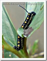Caterpillars Attack 16