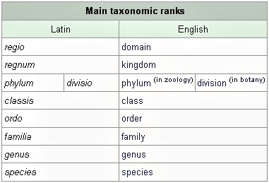 main taxonomic ranks
