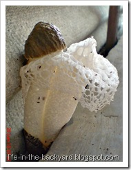 weird white mushroom_jamur ular 2