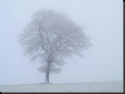 tree-in-fog