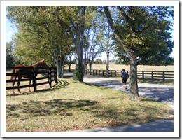 runnerhorse