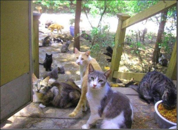 A Terra Prometida para Gatos (35)