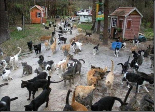 A Terra Prometida para Gatos (41)
