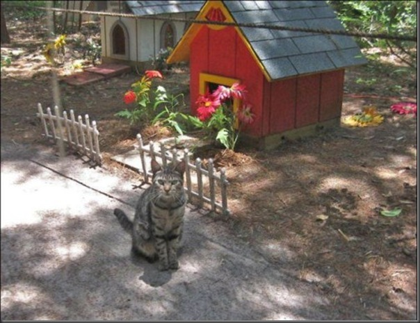 A Terra Prometida para Gatos (36)