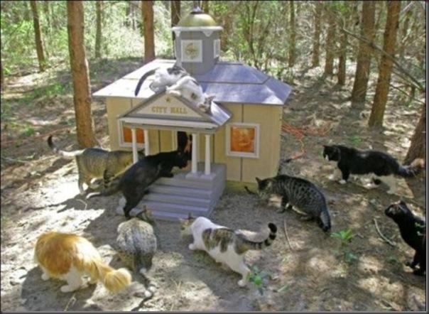 A Terra Prometida para Gatos (17)