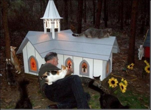 A Terra Prometida para Gatos (11)