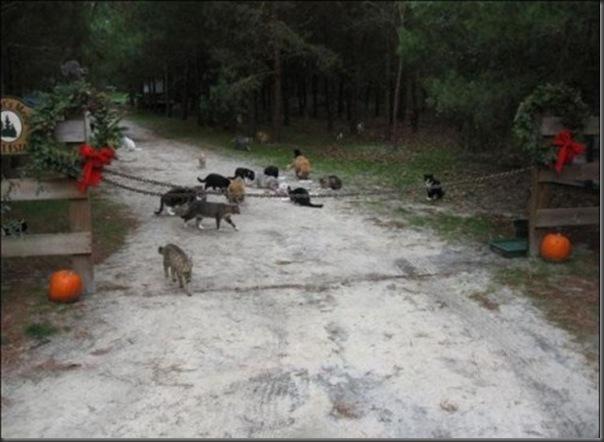 A Terra Prometida para Gatos (4)