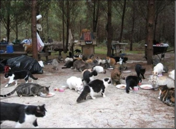 A Terra Prometida para Gatos (3)