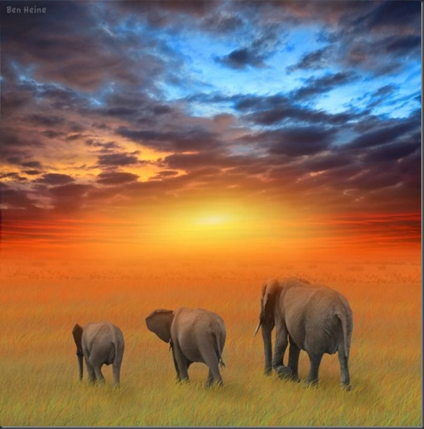 Lindas imagens da africa (16)