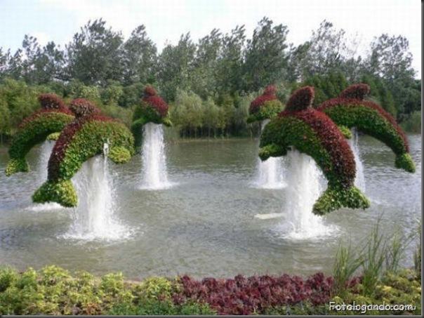 Lindo jardim (3)