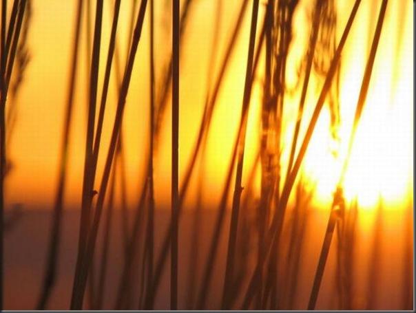 Lindas imagens do pôr do Sol (24)