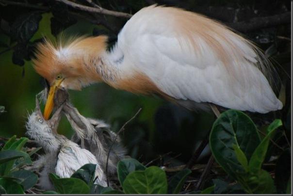 Filhotes com seus pais no mundo animal (2)