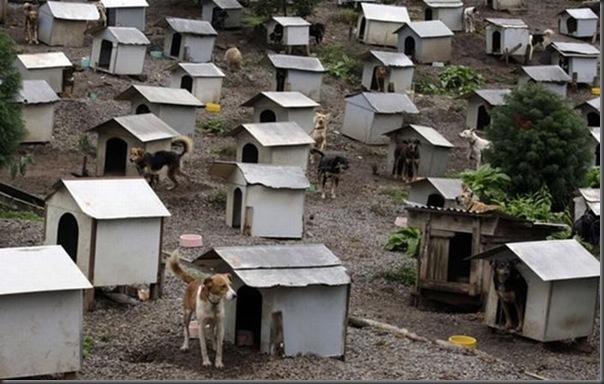 Favela para cães no Brasil (4)