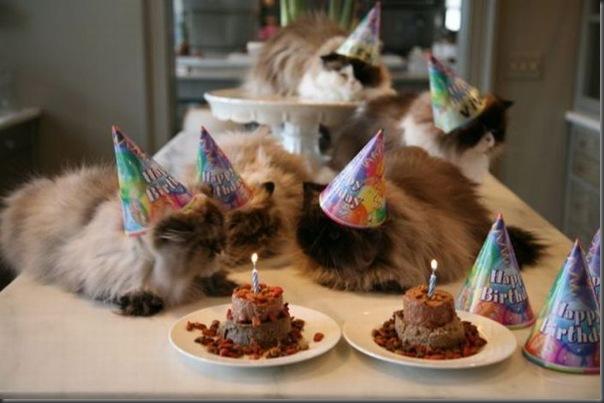 Comemorações de aniversário de gatos (3)