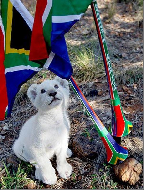 Animias torcedores na copa do mundo na africa (4)