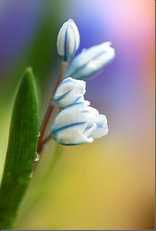 Lindas imagens de flores (18)
