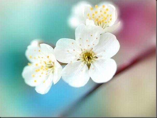 Lindas imagens de flores (15)