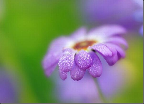 Lindas imagens de flores (10)
