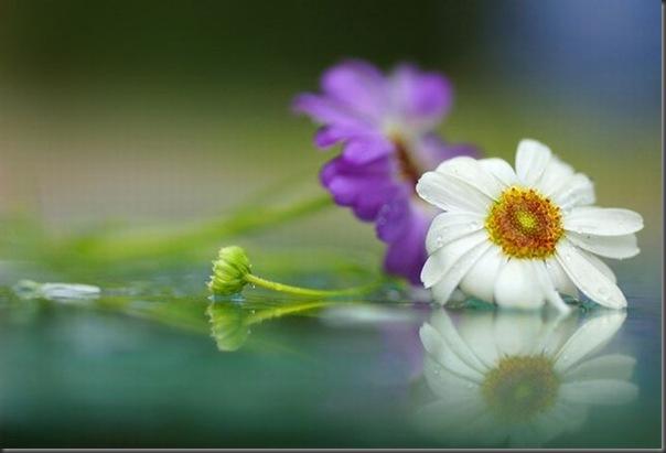 Lindas imagens de flores (9)