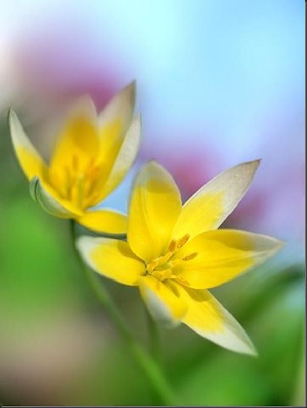 Lindas imagens de flores (5)