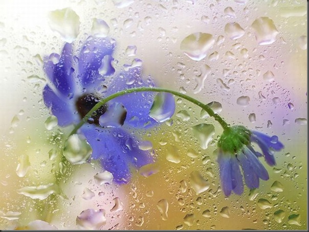 Lindas imagens de flores
