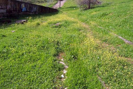 Casi perdido en la incipiente primavera