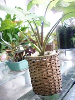 A brass basket giften by someone 5 years ago