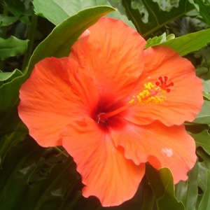 Hibiscus in Villa Sabandari, one of the newest hotels with yoga teacher training in Bali