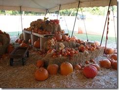 pumpkin 001
