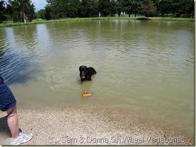 DoggiePark08-01-10i