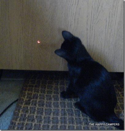 cat toys 011