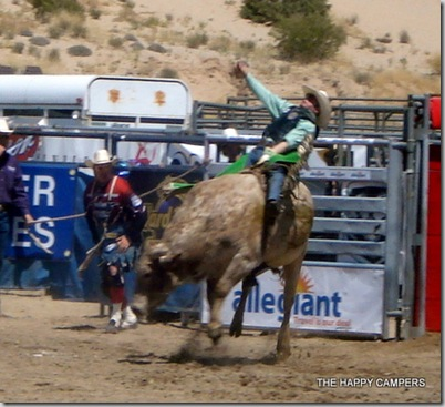 bulls 014