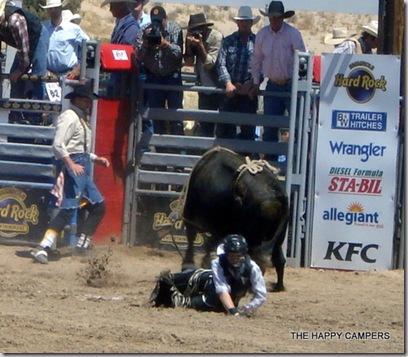 bulls 011