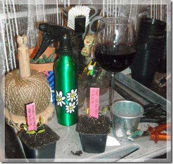 vinglass i drivhuset