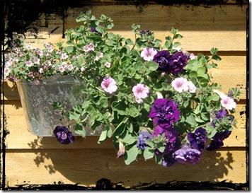 sommerblomster på veggen