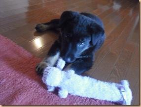 Zoey Puppy 017