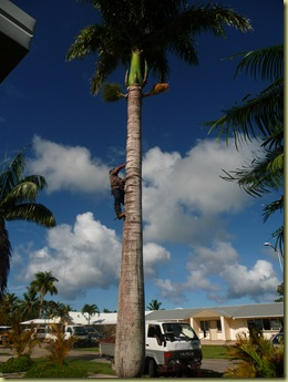 Cleaning up our palm tree--school is across the street