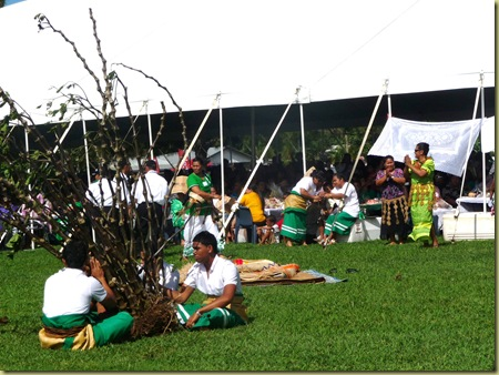 Kava tree is a traditional gift for royalty