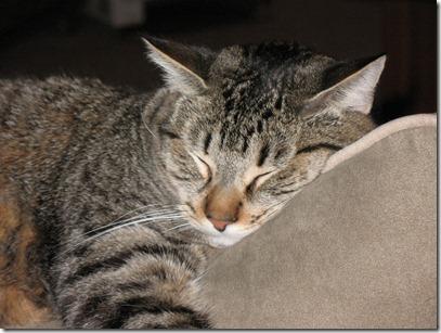 Sleeping Jasper