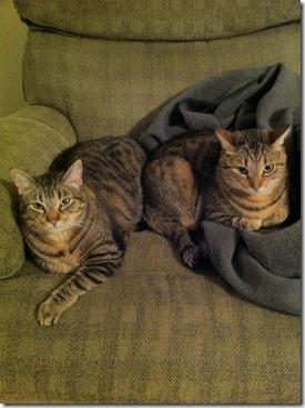 snuggle buddies 1