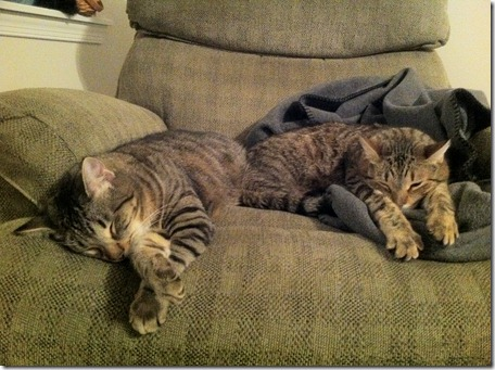 snuggle buddies 4